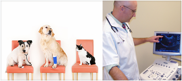 Veterinary Orthopedic Surgery And Ultrasound